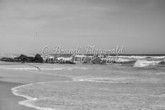 BrandiFitzgerald.LidoBeach032 (brandifitzarts) Tags: newyork beach waves scene longbeach shore eastcoast beachscene sandwriting lidobeach newyorkbeach brandifitzgerald sayingsinsand