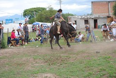 Jineteada de Tito Velazquez (jaramillohectorsergio) Tags: argentina caballo palenque gauchos jujuy monta doma jineteada palpala titovelazquez cachullani