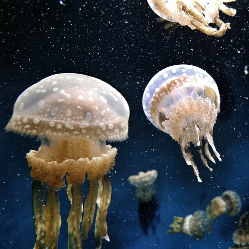 Jellies in space
