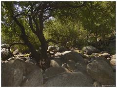 130906_Madrigal de la Vera_33 (ManuMartinlop) Tags: senderismo piedras cascada rutas potro finca extremadura higueras higos cauce lavera río madrigaldelavera cáceres montañas excursión gargantadealarcón picodealmanzor