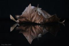 Reflected (Tony Dias 7) Tags: black macro reflection leaf sharp