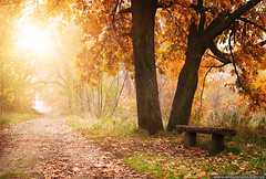 Autumn in the park (Anton_ua) Tags: park travel autumn light sun sunlight color tree fall nature beauty yellow fog forest bench season landscape outdoors gold leaf oak woods background nobody scene lane colored footpath tranquil scenics locations