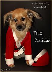 Un recuerdo (Leles14) Tags: navidad noel perro papa felicitacin lavueltalamundo