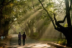 Floodlights of nature (harshit _agarwal) Tags: winter shadow people sun india tree green weather fog landscape natural iisc bangalore naturallight sunburst burst karnataka