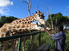Uganda Wildlife Education Centre - Uganda