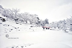 Bridge Over the Moat.  Glenn E Waters. Japan 2014. Over 3,000 visits to this photo. (Glenn Waters in Japan.) Tags: trees winter snow beautiful japan japanese aomori  hirosaki moat   japon d800      nikond800  glennwaters photosjapan