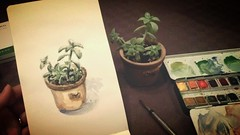 Crassulaceae (Aurelie Morin) Tags: stilllife moleskine watercolor sketch drawing aquarelle sketchbook dessin naturemorte sketchkit flickrandroidapp:filter=none