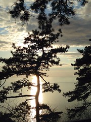 Spring is closer... (emmequadro61) Tags: trees sunset sea panorama sun primavera nature alberi spring tramonto mare gulf natura sole trieste golfo uploaded:by=flickrmobile flickriosapp:filter=nofilter