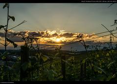 Sunset #1 (Johannesdd) Tags: sunset vineyard stuttgart nex6 sel18200