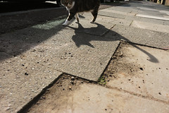 you wait ages for a genre-defining somebody else's cat photo and then three come along at once (part 1) (dr_loplop) Tags: street shadow cat weeds long pavement perspective sidewalk dirt paving gravel wonk notmycat wonk10
