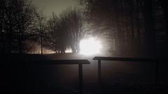 das ziel vor augen (christoph-schulze) Tags: auto wood light tree car night forest dark long exposure nacht path hell fortune wald schwarz dunkel weg longtimeexposure longtime fortunately hinderniss