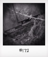 "#DailyPolaroid of 19-3-14 #172 • <a style=""font-size:0.8em;"" href=""http://www.flickr.com/photos/47939785@N05/13678308864/"" target=""_blank"">View on Flickr</a>"