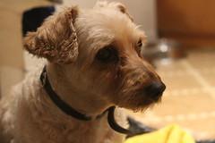 IMG_0702 (umabeca) Tags: dog co cachorro 700d