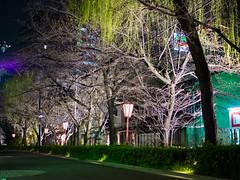 鴨川 (ilin Huang) Tags: 日本 鴨川 2014 京都市 京都府 京阪神親子七日遊
