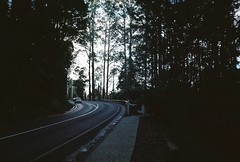 Silhouette trees, road, foot path, footpath, (Matthew Paul Argall) Tags: road trees tree roads footpath elikon35c