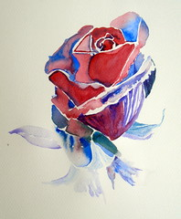 Rose, by Catie - DSC00705 (Dona Minúcia) Tags: art painting watercolor study paper rose beauty nature flower arte pintura aquarela flor rosa natureza belo beleza