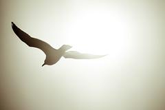 2017 0308 St. Joe Pier-43 (greenshots32) Tags: mckenziehassle michellehassle nature silverbeach snowandice tiscorniabeach tiscorniapier beach bigwaves seagulls sunset winter