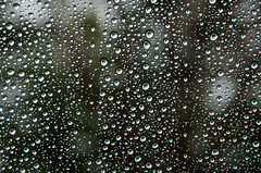 087/365 - Rain Drops (laureanophoto) Tags: project3652017 rain wet droplets water 365 weather shower
