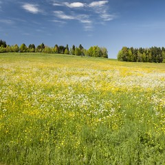"""Landscape"" (helmet13) Tags: flowers trees colors landscape raw meadow silence simplicity landschaft bume studies earlysummer farben aoi blumenwiese schwbischealb ruhe swabianalb einfachheit frhsommer peaceaward d700 platinumpeaceaward"