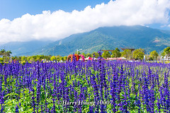 Harry_10007,,,,,,,,,,,,,,,,, (HarryTaiwan) Tags: taiwan    d800                  harryhuang    hgf78354ms35hinetnet