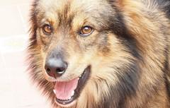 Perros (anibalweb) Tags: perros