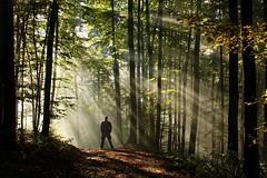 Hug of rays 1 (Milan Jakl Photography) Tags: morning autumn trees light mist sunshine fog natura rays