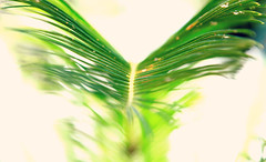 Flight (WestCoasting) Tags: abstract green leaf catchycolours neworleans palm tropical