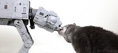 True Love (Jarod Kearney) Tags: cat walker atat