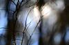 (lincoln koga) Tags: nature azul 50mm nikon dof cotidiano observe lugares lincoln urbano beleza luzes abstrato tempo galhos passeio momentos olhares criação f12 cidades foco simplicidade desfoque observando koga manchas encontros aprendizado explorando chamado admiração suavidade contemplação ebf 2013 pedaçosdemim expressando aguardo euvejo lincolnkoga 50tinha novosrumos d7000 euencontro meutempo lincolnseijikoga novoslugares novosolhares meumomento acampamentomoriah refúgiosecreto silêncioreflexivo tempodesilêncio meusencontros voudescobrindo vouexplorando ofertadeamor teentrego nossoviver tudoemmim aguardoporvocê