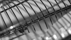 LINYA (converging lines) (ariel gitana) Tags: converginglines blackandwhite monochrome boracayisland bestlandscape seascape nikoncoolpixp100 philippineisland philippines kalibo manocmanoc pinay pinas pinoy teampinas kodakero bridgecamera digital splendidlandscape macro colors bangka boat seashore fish isda