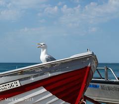 Mixbuster ... (Mick Cam) Tags: ocean bird nature