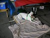 GreyhoundPlanetDaySept132009037