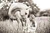 Black and White (Sasha L'Estrange-Bell) Tags: summer blackandwhite horse field animal bokeh palominohorse oliviabell