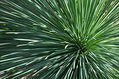 Art of Nature (Stella Blu) Tags: plants green grass bigmomma stellablu nikkor105mmf28gvrmicro thechallengefactory nikond5000 herowinner storybookwinner pregamewinner