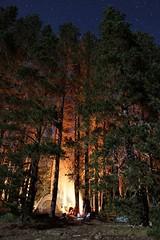 Camping (Call Me Ashmael) Tags: california camping trees light night stars laketahoe campfire sierras starynight