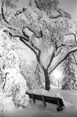022269 12 (ndpa / s. lundeen, archivist) Tags: park trees winter blackandwhite bw snow storm tree 1969 film monochrome boston night 35mm ma lights blackwhite path massachusetts nick snowstorm footprints nighttime 1960s february benches snowfall blizzard pathway beaconhill publicgarden snowbank winterstorm dewolf heavysnow bostonpublicgarden parkbenches bigsnow coveredinsnow recordsnowfall recordsnow nickdewolf photographbynickdewolf