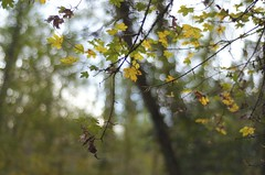 Autumn Bokeh (Yonatan Souid) Tags: life autumn nature colors beauty bokeh breath fresh simple respirer d7000