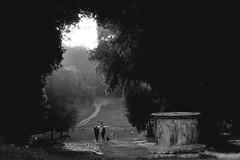 Tramonto a Villa Pamphili (luporosso) Tags: park bw italy parco naturaleza rome roma nature nikon italia natura bn bianconero biancoenero pozzo antichit villapamphili naturalmente supershot nikond300s