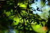 (lincoln koga) Tags: blue light sky verde green folhas luz nature leaves azul 50mm nikon dof cotidiano céu observe lugares lincoln urbano beleza luzes abstrato tempo galhos passeio momentos olhares criação f12 cidades cerulean foco simplicidade desfoque observando koga manchas encontros aprendizado explorando chamado admiração suavidade contemplação ebf 2013 pedaçosdemim expressando aguardo euvejo lincolnkoga 50tinha novosrumos d7000 euencontro meutempo lincolnseijikoga novoslugares novosolhares meumomento acampamentomoriah refúgiosecreto silêncioreflexivo tempodesilêncio meusencontros voudescobrindo vouexplorando ofertadeamor teentrego nossoviver tudoemmim aguardoporvocê