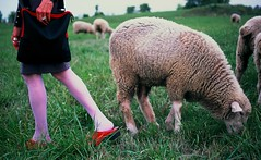 Red  Sheep and Pastures 1 (neohypofilms) Tags: red woman cinema color colour cute sexy green slr film girl grass fashion animals lady female 35mm vintage hair landscape nikon pretty fuji dress sheep sweet style retro 70s clogs hippie series lamas fm2 neohypofilmsphotographyphotographfm2