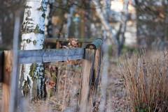 Happy Fence Friday (deta k) Tags: berlin fence germany deutschland zaun hff sooc nikond3000