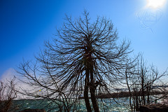 Arbor Man, Man. (emagine_miker) Tags: tree river scene niagara waterfalls