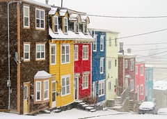 Colour in the Snow (Karen_Chappell) Tags: city homes winter house snow canada newfoundland downtown january stjohns nfld rowhouse jellybeanrow