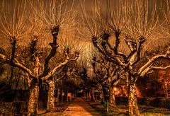 Struwwelpeter (Nihil Baxter007) Tags: trees orange night way scary alley nightshot nacht bäume baum belichtung weg allee struwwelpeter gruselig unheimlich platanen