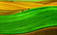 Green wave - one of my favorite works in desktop size (Katarina 2353) Tags: desktop wallpaper green fall film nature field analog landscape photography photo spring high nikon image outdoor wave paisaje hills size valley fields resolution agriculture paysage rolling katarinastefanovic katarina2353 serbiainspired