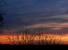 Fire (Alex-W.) Tags: trees sunset sky clouds soleil coucher ciel arbres nuages