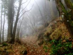 enchanted forest 33 (explored) (lotti roberto) Tags: apuane gabberi bosco forest foresta toscana tuscany fog nebbia fav25 fav50 fav75 fav100 fav125 fav150