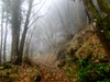 enchanted forest 33 (explored) (lotti roberto) Tags: apuane gabberi bosco forest foresta toscana tuscany fog nebbia fav25 fav50 fav75 fav100 fav125 fav150