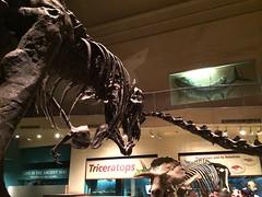 Smithsonian Dinosaur Hall - April 2014 (blakespot) Tags: history museum fossil smithsonian hall dinosaur natural exhibit renovation photostream