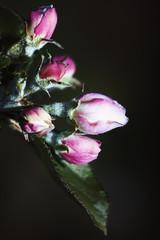 April 7 (Vlachbild) Tags: flowers environment bud sonystf135mmf28t45 sonyslta99
